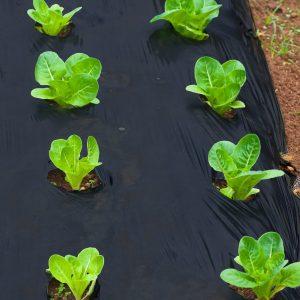 BioAgri biohajoava puutarhakate