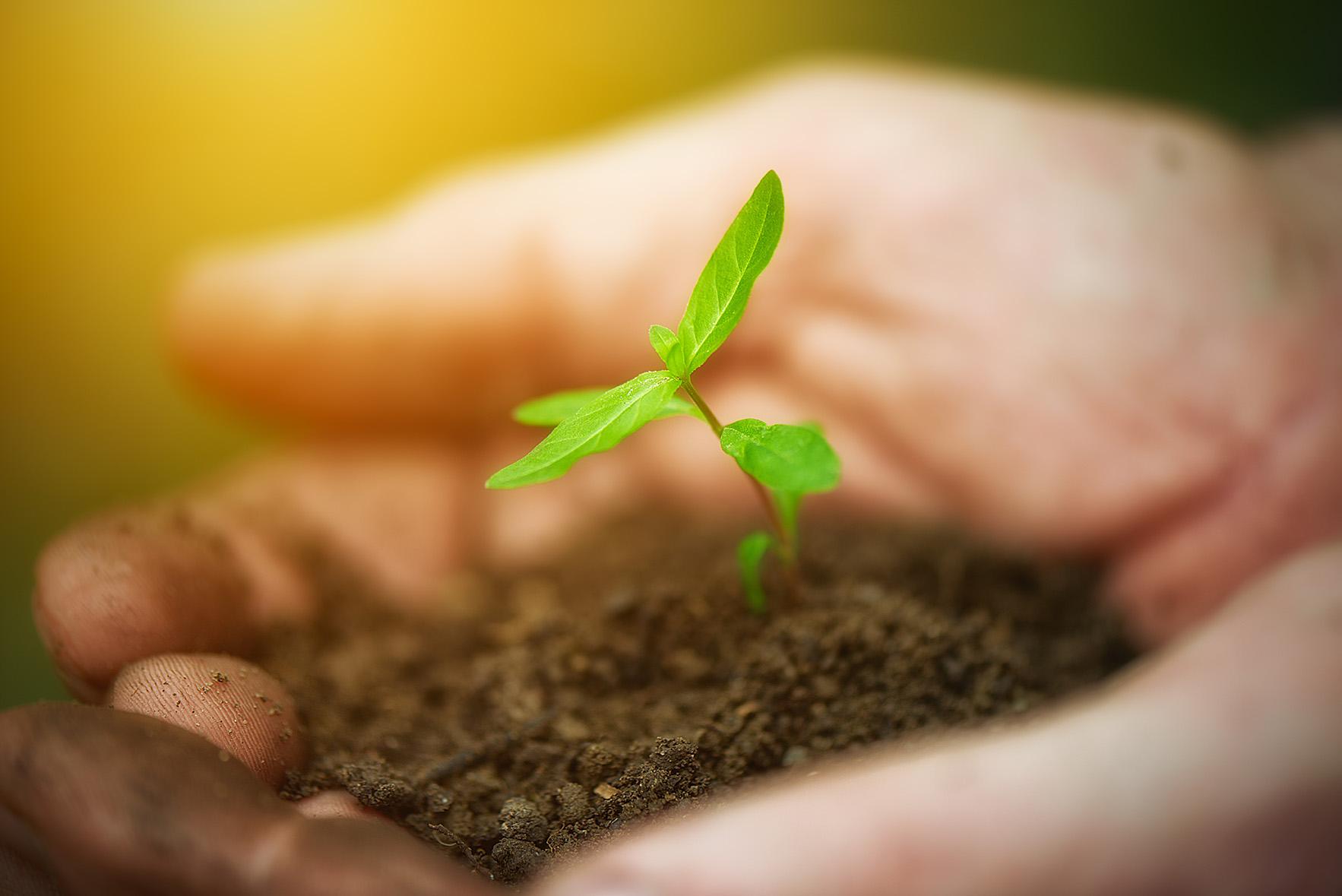 biodegradable compost soil plant