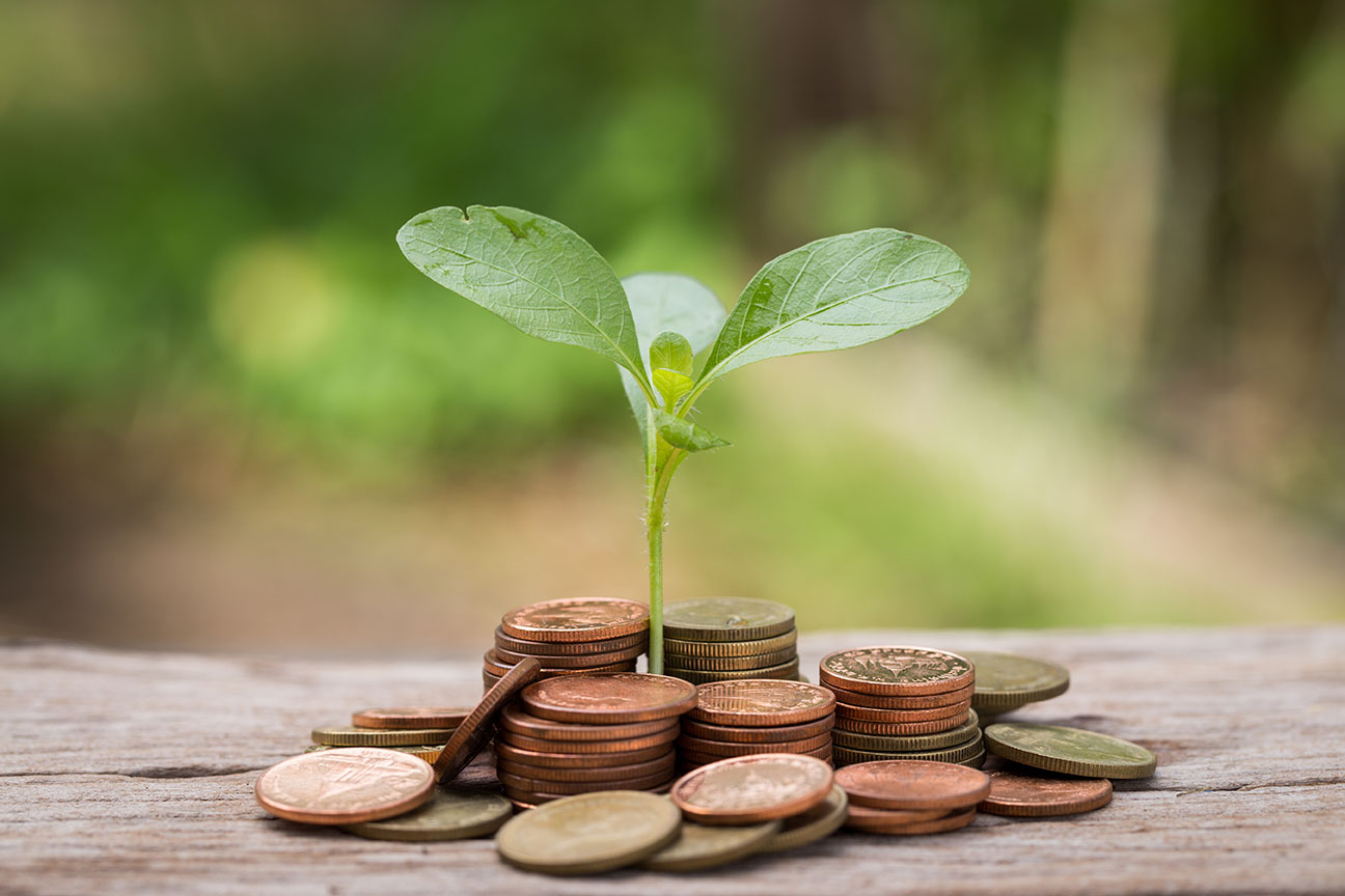 Compostable economy BioBag