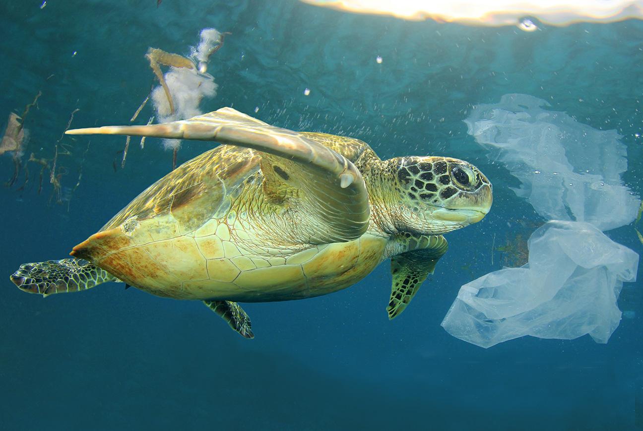 Kerromme, miten biohajoava muovi voi helpottaa valtamerien kuormaa.